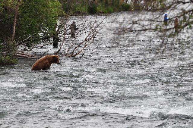 [Katmai National Park]