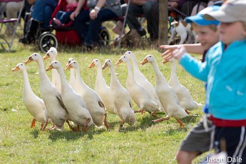 Ducks & Kids at Gower Show