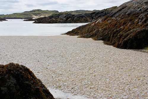 Shell covered beach