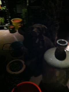 Dog statue in the dark