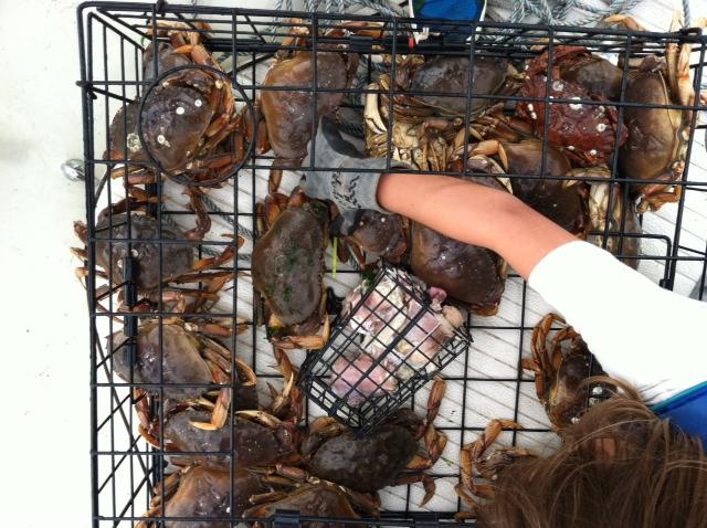 Widbey Island Crabbing