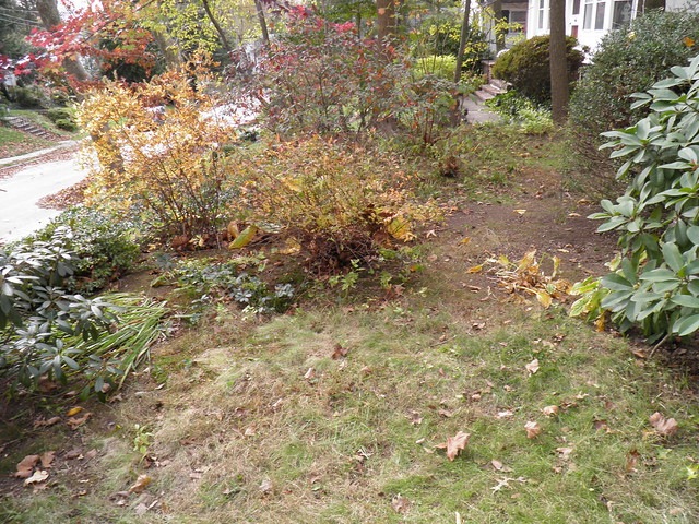 11 4 2012 - Front Yard (4)