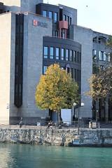 Arbres et couleurs d'automne à Genève