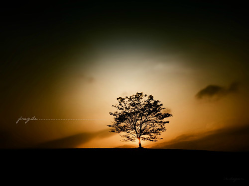 The Last Tree Standing by Arul Irudayam