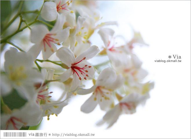 【桐花2014】南投油桐花景點~牛耳石雕藝術渡假村賞桐趣22