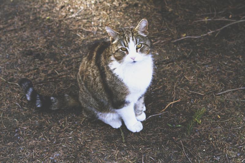 kisssssa