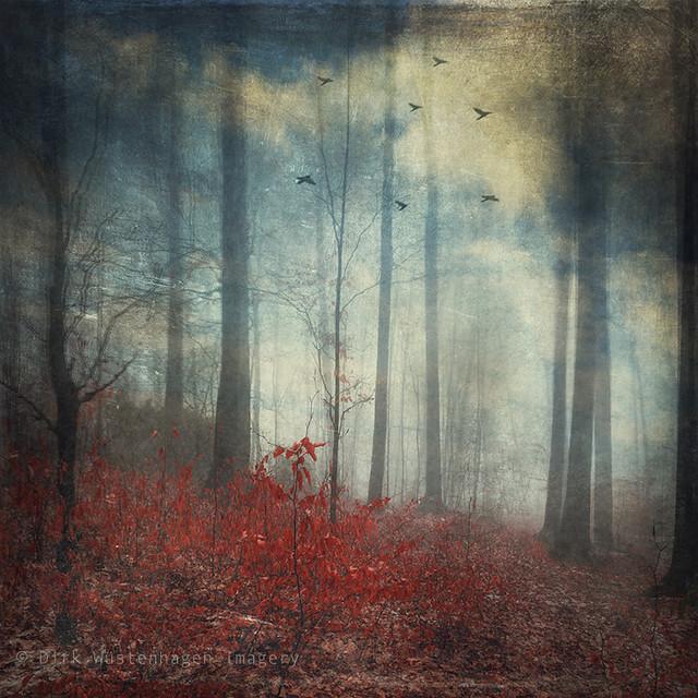 open woodland dreams