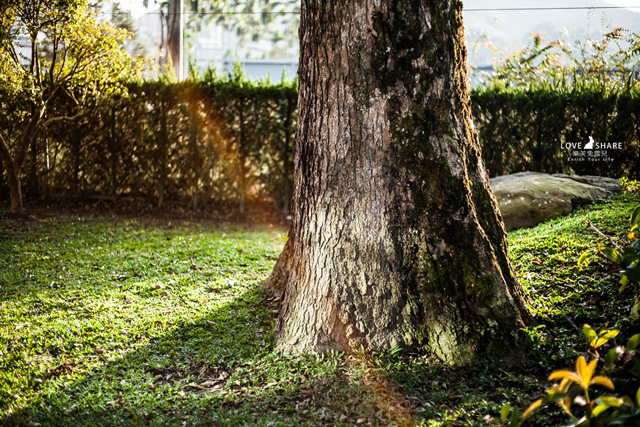【南投魚池鄉民宿】悠閒寧靜,還有大庭園!日月潭附近民宿推薦@汎札嵐庭園民宿
