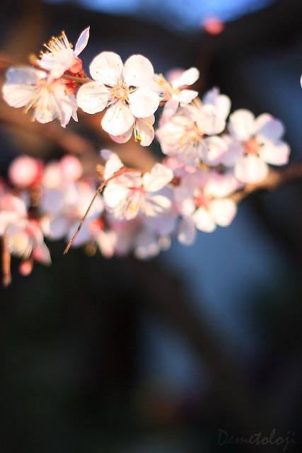 bahar dalları_1