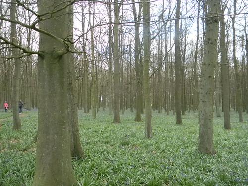 Dockey Wood