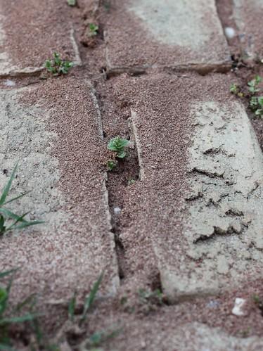 Pollen_2012_18