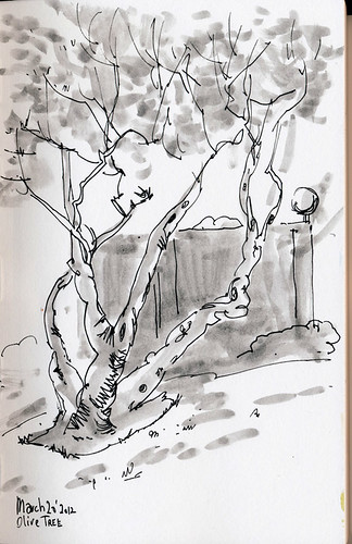 March 2012: Olive Tree by apple-pine
