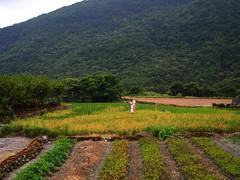 八煙的水梯田隨著四季流轉呈現不同景觀,當地石砌梯田工法,其他地方看不到。