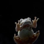 Tree Froggy
