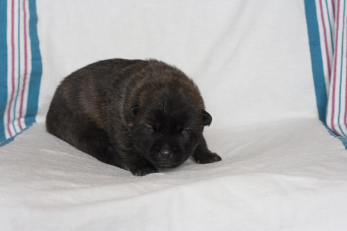 Kumi-Fall2011-Day12-Puppy2-Male-c