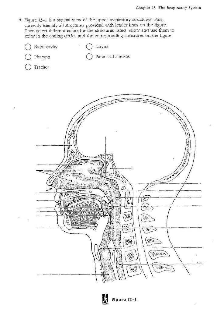 Upper RespiratoryB