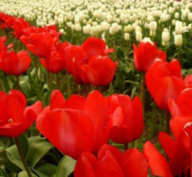 Photo 8 - 2012-05-04