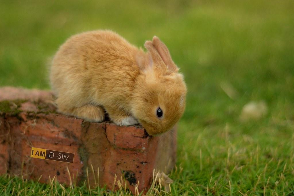 Baby Rabbit (19)
