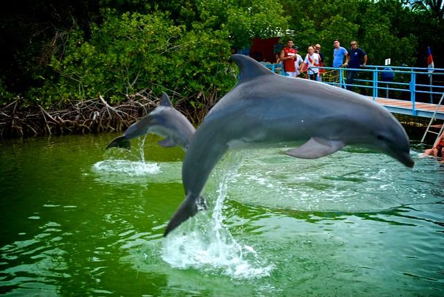 anteketborka.blogspot.com, dauphins2