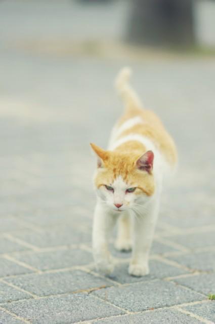 cat (63)