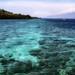 Bali. Coral reef at Menjangan Island. by shaltrin