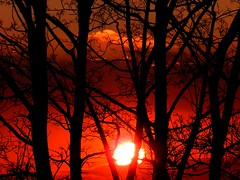 surreal sunset through the trees by brocks87