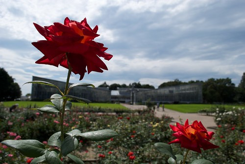神代植物園バラ園