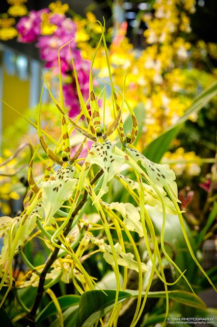 Singapore Garden Festival - 008