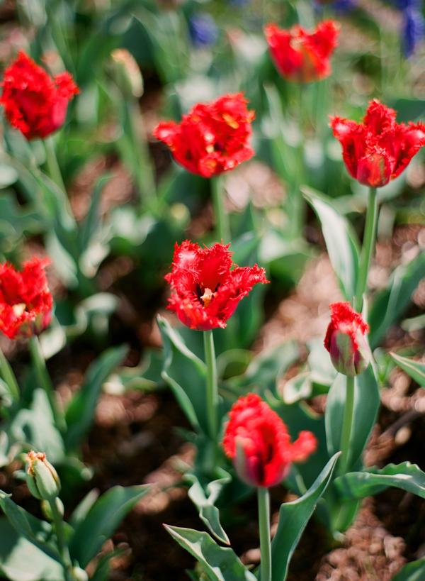 2012_0413_MtVernonTulipsPt2_14.jpg