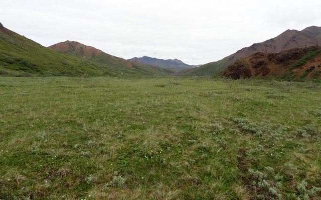 denali-wide-open-landscape
