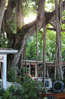 Owen's Fish Camp Sarasota FL the Banyan