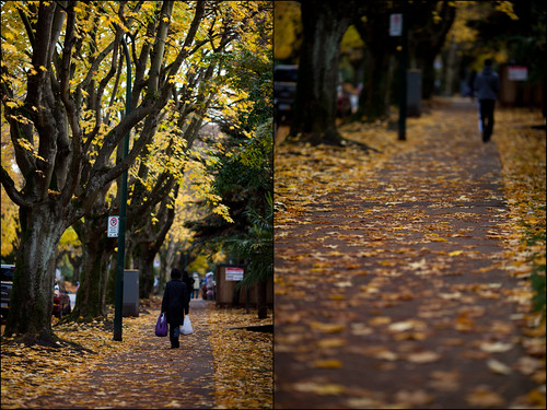 autumn in Vancouver (by: Junichi Ishito, creative commons)