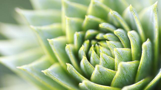 green plant again