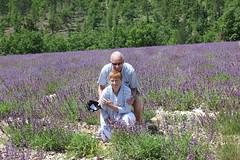 woodland(0.0), bluebonnet(0.0), prairie(1.0), agriculture(1.0), flower(1.0), field(1.0), english lavender(1.0), plant(1.0), lavender(1.0), lavender(1.0), wildflower(1.0), flora(1.0), crop(1.0), meadow(1.0),