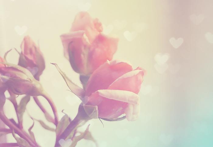bokeh roses