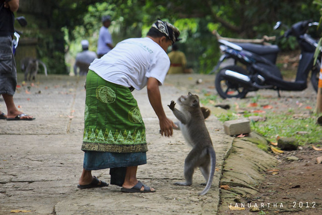 bali funny image : A short conversation before leaving at Monkey Forest, Ubud