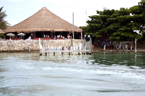 nurse shark cage @ isla mujeres