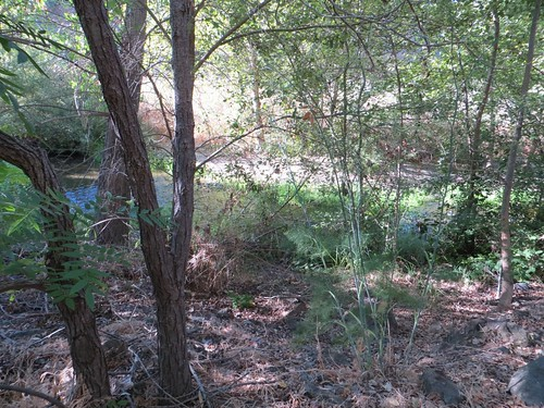 The riparian area, and stream