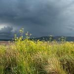 Moody Sky Over West Shore, Llandudno
