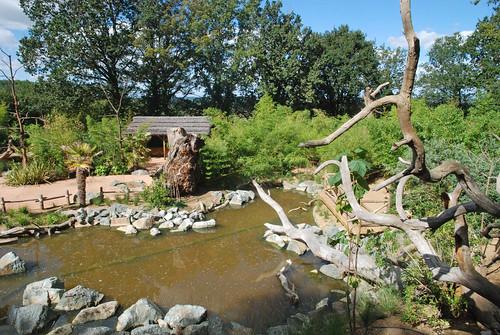 L'île des lémuriens im Zoo de la Flèche