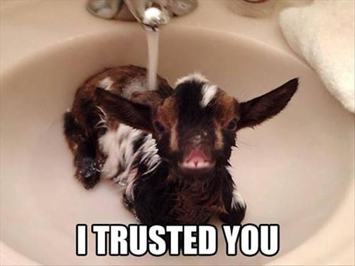 Wash the goat