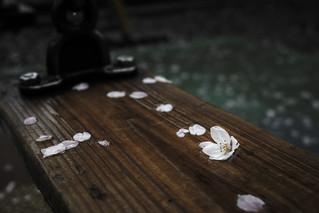 Sakura 20140403