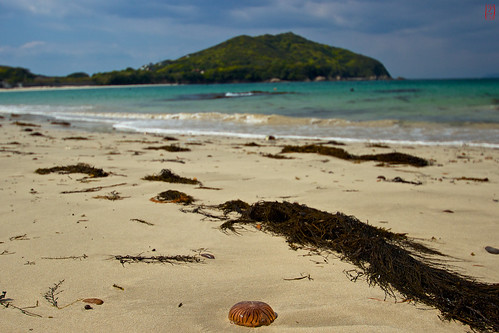ocean voyage trip travel beach japan jellyfish ise plage japon océan méduse japon2013