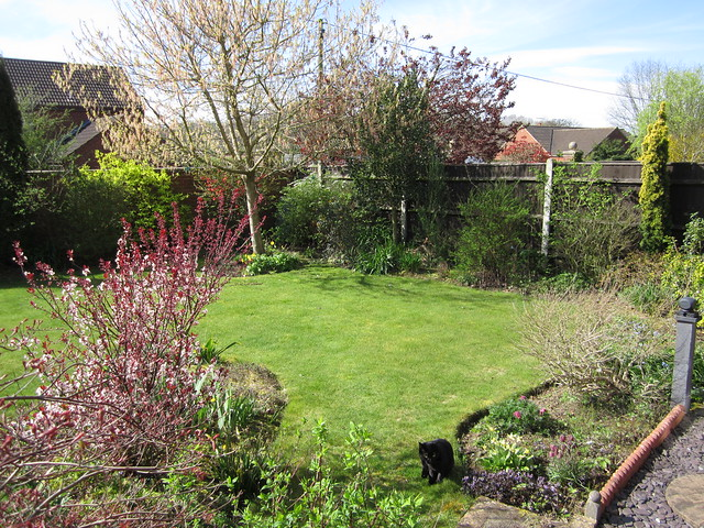 garden April 5th 2014 (6)