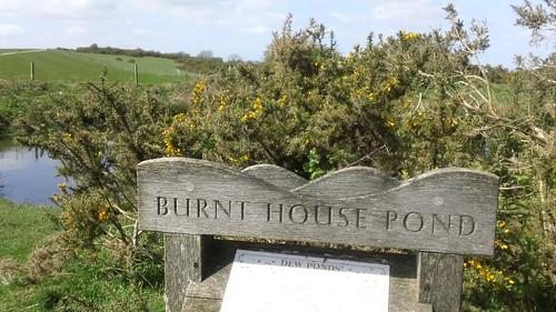 Burnt House Pond