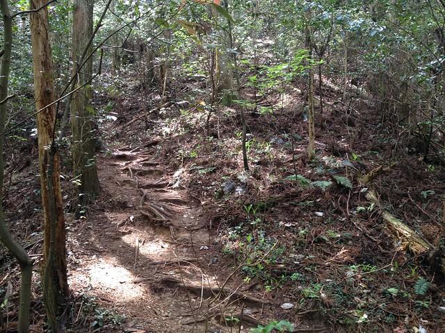 納古山 中級コース 登山道