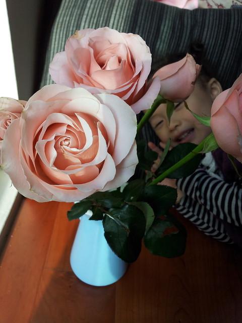20120326  潔咪挑的costco的玫瑰花開了。