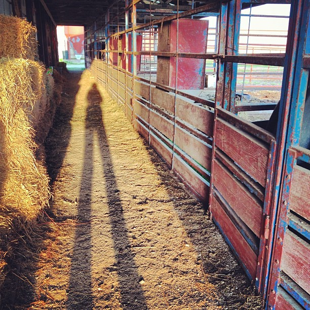 Long Shadows of Sunset #stable #barn #shadow