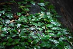 Borneo 2009 Spring - Forest