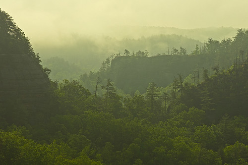 Clearing fog in the Red River Gorge, KY